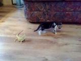 котёнок и ящерици